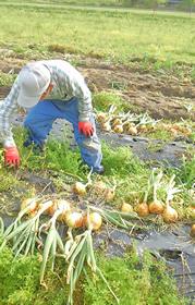 【能勢農場から】量ではなく質を問う社会へ 今年で40年目を迎える能勢農場