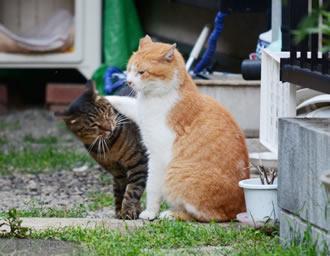 会員から(8) のら猫を増やさないために