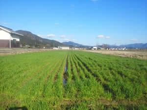 【能勢農場から】新設春日農場 酪農・農業の現場と連携して