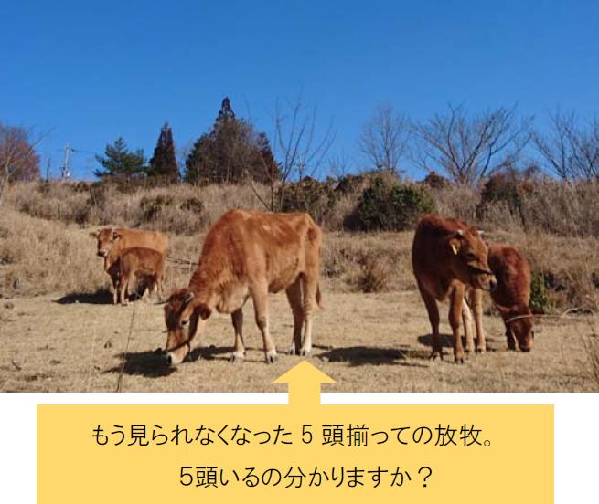 もう見られなくなった5 頭揃っての放牧。5頭いるの分かりますか?